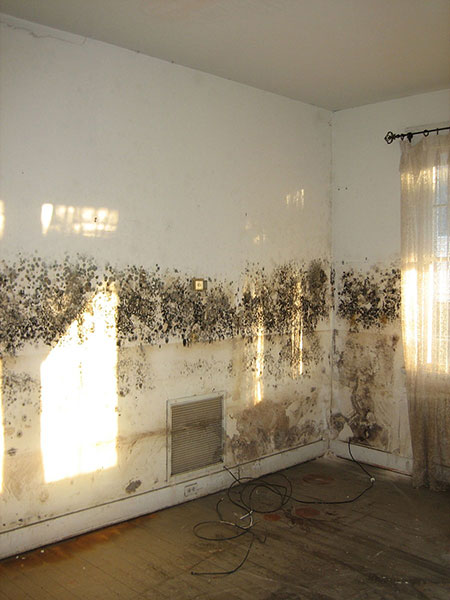 mold removal chicago after flood